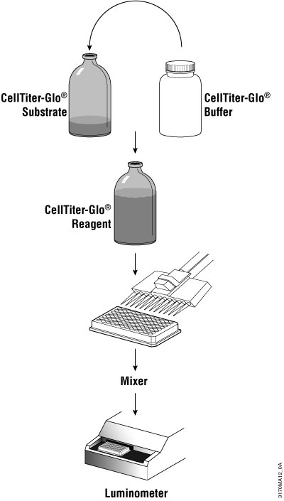 Top Line Schematic Diagram Of CellTiter GloR Luminescent Cell Viability Assay Protocol