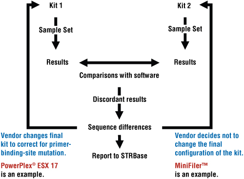 Summary of the steps used in concordance testing and how they affect STR multiplex development.